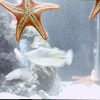 Starfish at the Waikiki aquarium