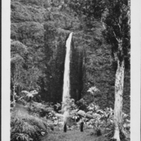 View of Akaka Falls