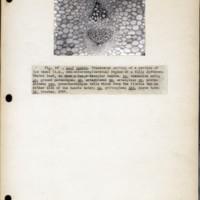 Page 42 – Leaf bundle