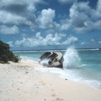 Abandoned Boat, Run Aground on Pikelot Shoreline