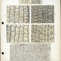 Page 54 – Epidermis