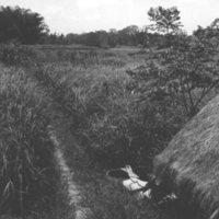 897. [Rice field]