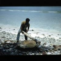Turtle. Rikjalmon clubbing the turtle to death with a…