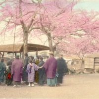 [People gathering under the cherry blossoms]