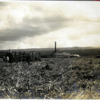 Sugar cane field and workers with sugar mill in…