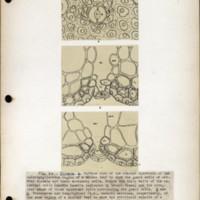 Page 60 – Stomata