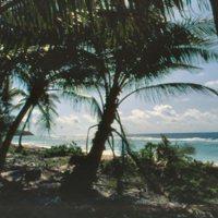 Beach on Satawal through Trees