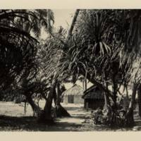 [0035 - Arno Atoll, Marshall Islands]