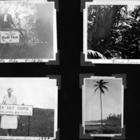 Page 33: Signs, Fern and Palm Trees