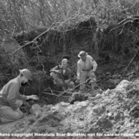 Hawaii War Records Depository HWRD 0731