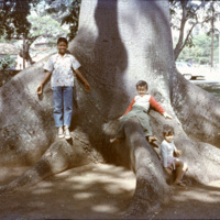 Children on large tree roots