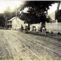 Man with Three mules on a road next to trolley tracks