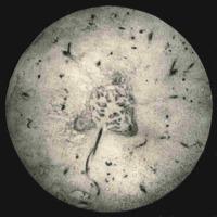 Physiology-Soils PM Negatives   013-016