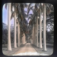 Royal palm avenue (at the Schaeffer-Wodehouse home)