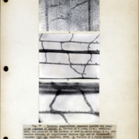 Page 41 – Parallel longitudinal vascular bundles and…