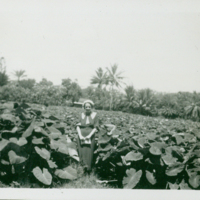 [106] Woman at a Taro Farm