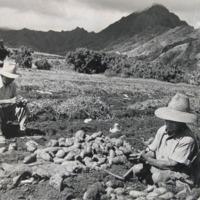 Waikane farmers
