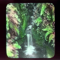 Waterfall with purple ferns