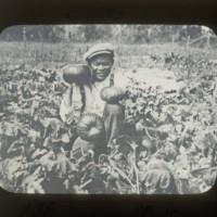 Pumpkin field: 瓜畑