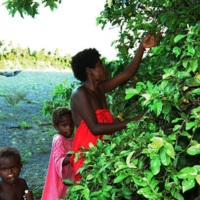 Dumagat Family Foraging for Wild Fruits