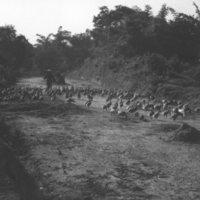 840. [Flock of geese in road]