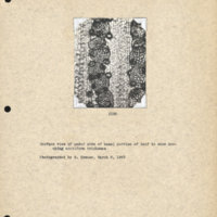 Physiology-Soils PM Negative 128