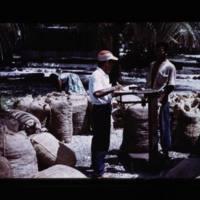 Visit of M/V Kaselehila. Copra being weighed at east…