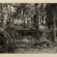 [0024 - Arno Atoll, Marshall Islands]