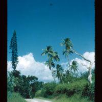 N. of Houaïlau (sapin caledonien and coconuts)