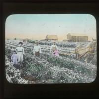 Sawahata Sosuke's farm (a member of the Nippon…