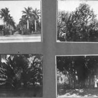 [012] [Palms and foliage]