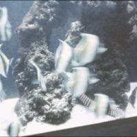 Fishes at the Waikiki aquarium