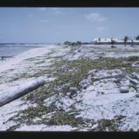 Eniwetok (Fred) Island - same stand as previous three…