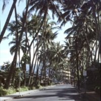 Road near hotels and palm trees