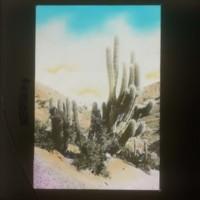 Cactus: [サボテン]
