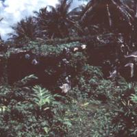 Nan Matal [Nan Madol]. Ponape. July 1950